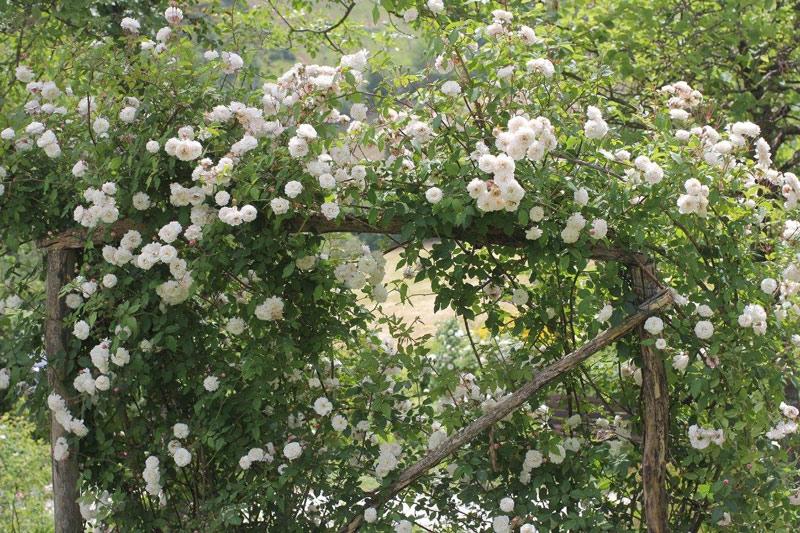 Oltre-il-Giardino-29-maggio-visita-giardino-11
