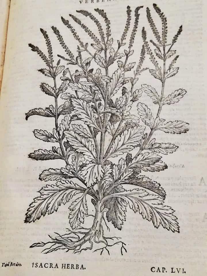 Oltre-il-Giardino-antichi-erbari-11