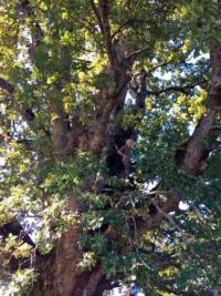 Oltre-il-giardino-quercia-cannibale-2