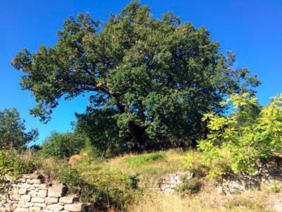 Oltre-il-giardino-quercia-cannibale-3