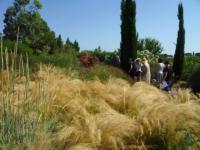OLG-25-giugno-vivaio-e-giardino-Mates-3