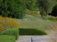 OLG-25-giugno-vivaio-e-giardino-Mates-5