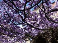OltreIlGiardino-17-aprile-tesori-verdi-11