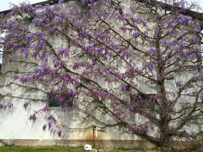 OltreIlGiardino-17-aprile-tesori-verdi-32