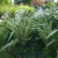 OltreIlGiardino-paradis-des-papillons-1