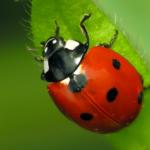 lotta biologica con insetti